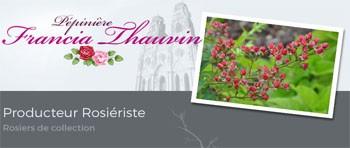 Pépinière Francia Thauvin